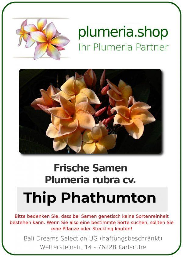 """Plumeria rubra """"Thip Phathumton"""""""