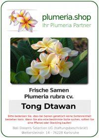 "Plumeria rubra ""Tong Dtawan"""