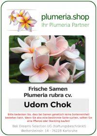 "Plumeria rubra ""Udom Chok"""