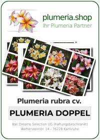 "Plumeria rubra ""Doppel"""