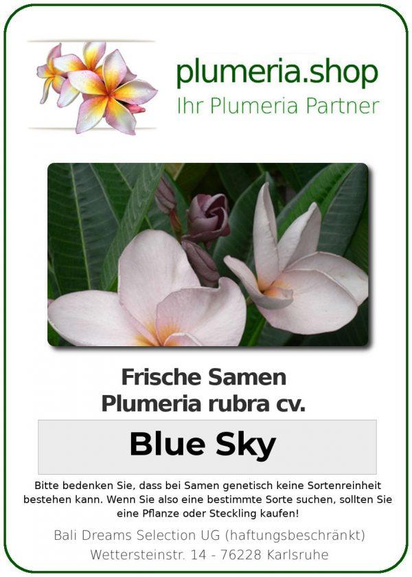 "Plumeria rubra ""Blue Sky"""