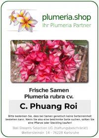 "Plumeria rubra ""Chompoo Phuang Roi"""