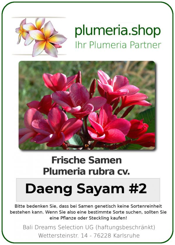 """Plumeria rubra """"Daeng Sayam #2"""""""