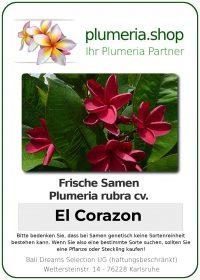 """Plumeria rubra """"El Corazon"""""""