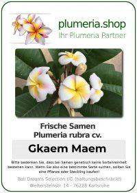 """Plumeria rubra """"Gkaem Maem"""""""