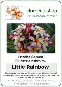 """Plumeria rubra """"Little Rainbow"""""""
