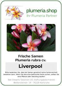 "Plumeria rubra ""Liverpool"""