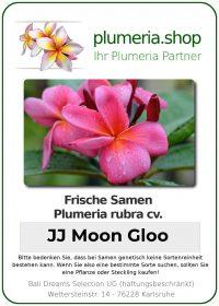 "Plumeria rubra ""Moon Gloo"""