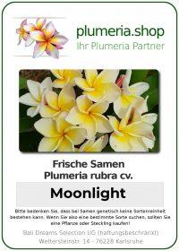 """Plumeria rubra """"Moonlight"""""""