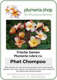 """Plumeria rubra """"Phet Chompoo"""""""