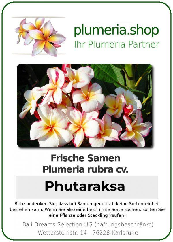 """Plumeria rubra """"Phutaraksa"""""""