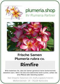"Plumeria rubra ""Rimfire"""