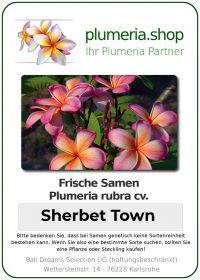 "Plumeria rubra ""Sherbet Town"""