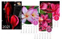 Plumeria.Shop Jahreskalender