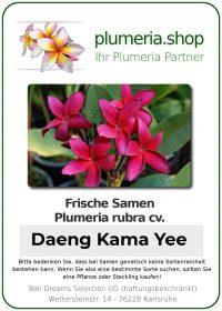"Plumeria rubra ""Daeng Kama Yee"""
