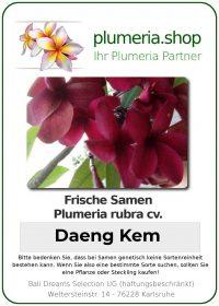 "Plumeria rubra ""Daeng Kem"""