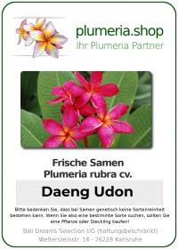 "Plumeria rubra ""Daeng Udon"""