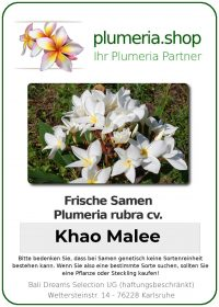 "Plumeria rubra ""Khao Malee"""