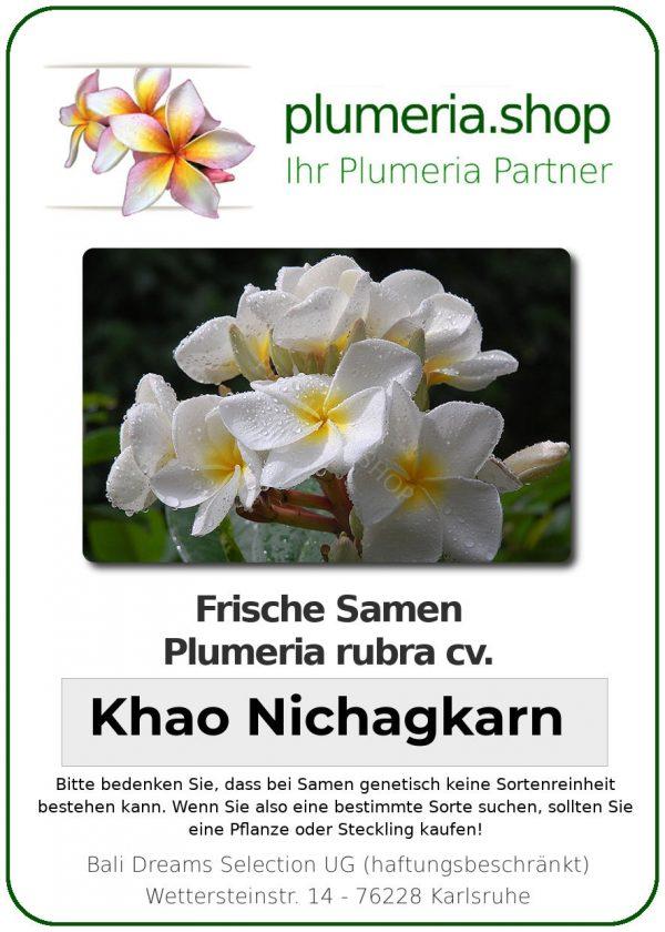 "Plumeria rubra ""Khao Nichagkarn"""
