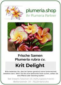 """Plumeria rubra """"Krit Delight"""""""