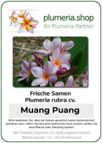 """Plumeria rubra """"Muang Puang"""""""