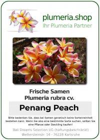 "Plumeria rubra ""Penang Peach"""