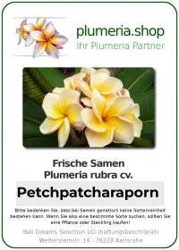 "Plumeria rubra ""Petchpatcharaporn"""
