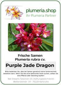 "Plumeria rubra ""Purple Jade Dragon"""