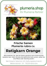 "Plumeria rubra ""Ratigkan Orange"""