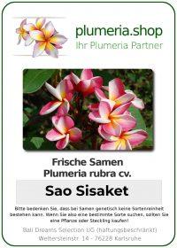 "Plumeria rubra ""Sao Sisaket"""