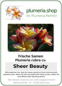 "Plumeria rubra ""Sheer Beauty"""