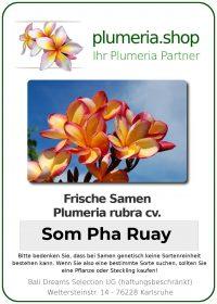 "Plumeria rubra ""Som Pha Ruay"""