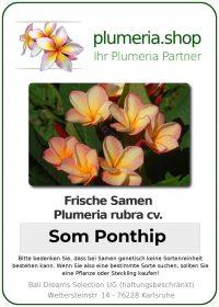 """Plumeria rubra """"Som Ponthip"""""""