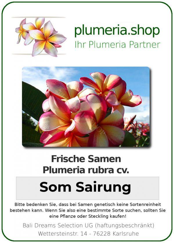 "Plumeria rubra ""Som Sairung"""