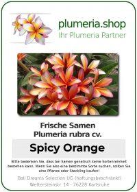 """Plumeria rubra """"Spicy Orange"""""""