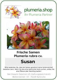 "Plumeria rubra ""Susan"""
