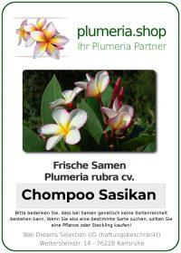"Plumeria rubra ""Chompoo Sasikan"""