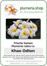 "Plumeria rubra ""Khao Odton"""