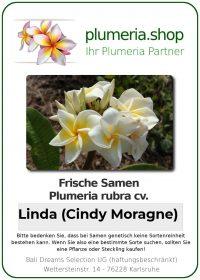 """Plumeria rubra """"Linda"""""""