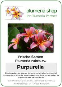 """Plumeria rubra """"Purpurella"""""""