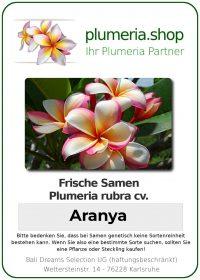 "Plumeria rubra ""Aranya"""
