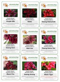 Plumeria von begehrten roten Sorten