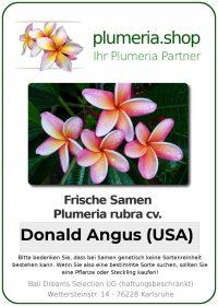 "Plumeria rubra ""Donald Angus (USA)"""
