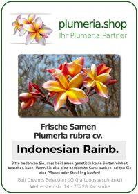 "Plumeria rubra ""Indonesian Rainbow"""