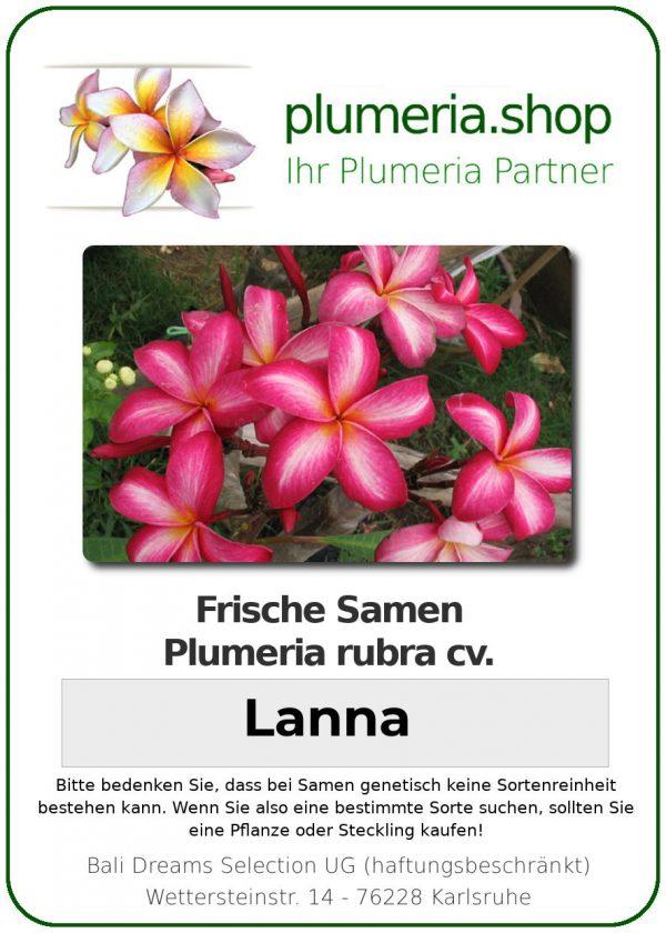 """Plumeria rubra """"Lanna"""""""