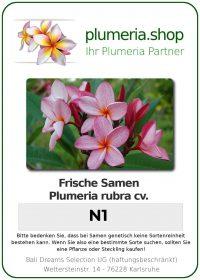 "Plumeria rubra ""N1"""
