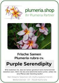 "Plumeria rubra ""Purple Serendipity"""
