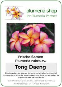 "Plumeria rubra ""Tong Daeng"""