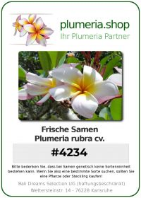 "Plumeria rubra ""#4234"""