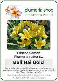 "Plumeria rubra ""Bali Hai Gold"""
